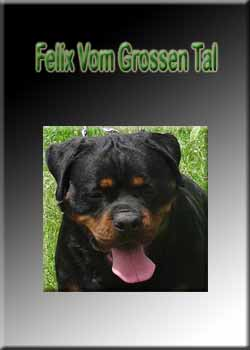 Hurleyhaus Rottweilers Rottweilers For Sale In Holts Summit Missouri